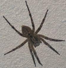 Résultats de recherche d'images pour «araignée photo»