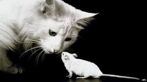 Resultado de imagen de Gato y ratón