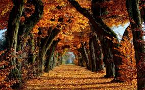 Image result for spooky autumn