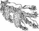 Зимняя ветка раскраска