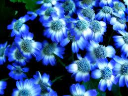 Image result for flowers blue