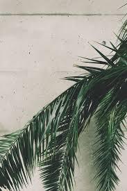 500+ <b>Palm Leaf</b> Pictures [HD] | Download Free Images on Unsplash