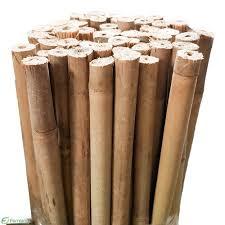 <b>Bamboo</b> Stakes <b>180cm</b> 12-14mmØ - Buy Online | Fernland