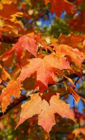 <b>Tree</b> identification - Wisconsin DNR