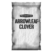 Arrowleaf Clover-Trifolium vesiculosum