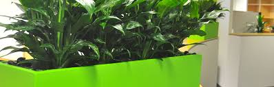 brisbane indoor plant hire for milton office plants brisbane office plants