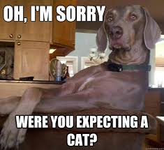 Passive Aggressive Dog memes | quickmeme via Relatably.com