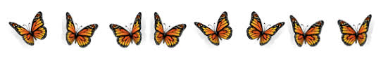Image result for butterfly divider