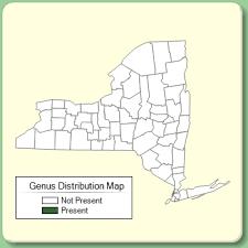 Trigonella - Genus Page - NYFA: New York Flora Atlas - NYFA: New ...