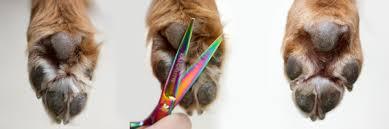 Afbeeldingsresultaat voor hondenpoten