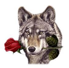 """Résultat de recherche d'images pour """"gifs de loups"""""""