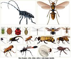 نتيجة بحث الصور عن صور حشرات