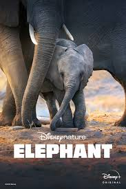 Disneynature's <b>Elephant</b> | Disneynature