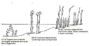 Transetto di una palude acida delle Alpi centrali (adattato da ...