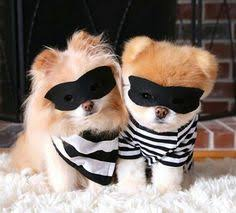 Image result for bandit dogs