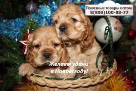 Организаторам СП - Готовим подарки на Новый 2018 год Собаки ...