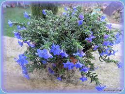 Risultati immagini per fiorellini come divisorio immagini