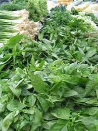 Kuvahaun tulos haulle herbs, pic