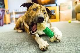 The 25 Best <b>Dog</b> Chew <b>Toys</b> of 2019 - <b>Pet</b> Life Today