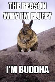 the reason why i'm fluffy i'm buddha - Meditating Bunny - quickmeme via Relatably.com