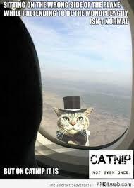 7-catnip-not-even-once-meme | PMSLweb via Relatably.com