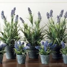 59 best домашние растения images on Pinterest | Lilies, Orchid ...