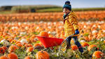 Take a look at 1 of UK's biggest pumpkin patches - on our doorstep