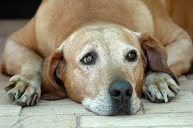 Image result for old dog photos