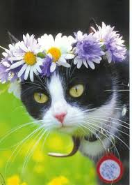 Image result for cats with blooms on their head