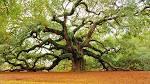 Images & Illustrations of oak