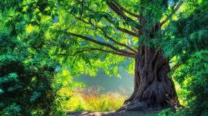 لكل محبي صور الطبيعة  اكبر تجميع لصور الطبيعة - صفحة 4 Images?q=tbn:ANd9GcSHqwX5sf2z44guJe96nFmm5Pc_yYCq_zrt6JBMaeetP2CCKs7o1w