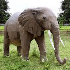 أسرار جديدة في عالم الحيوان images?q=tbn:ANd9GcS