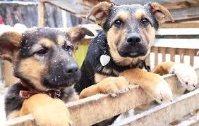 Жизнь собачья. Почему на улицах Берёзовского <b>так много</b> ...