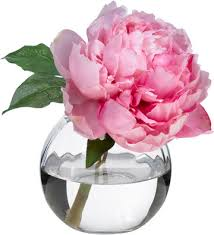 Image result for single peony