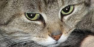 | Advisory Board on Cat Diseases (<b>ABCD</b>)