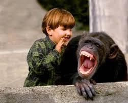 Risultati immagini per scimmia botta in testa