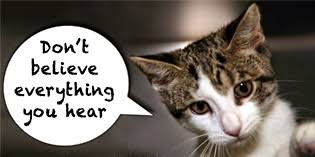 Image result for cat with FIV