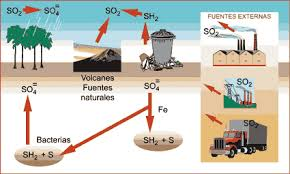 Resultado de imagen para ciclo del azufre