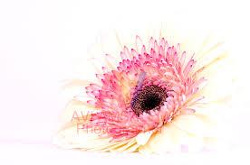 Image result for פרחים