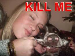 funny-dog-face-kill-me-meme-pics-photos.jpg via Relatably.com
