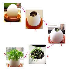 plant office beautifying office bonsai grass pots planters mini