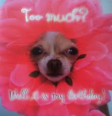 #dog #birthday #<b>flower</b> #<b>funny</b> #<b>cute</b> | Dogs, <b>Cute</b>, <b>Fun</b>