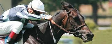 """Résultat de recherche d'images pour """"image de cheval de course"""""""