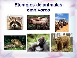 Resultado de imagen de imagenes de omnivoros