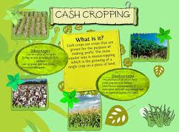 complete essay on commercial cash crops of words