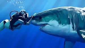 genie the shark genietheshark twitter sharks are pretty much the dogs of the ocean if you can get close enough to pet us pic com jzezyv5pbk