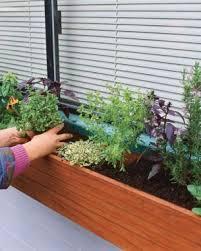 ideas window herb gardens herbs garden