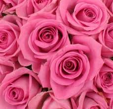 """Résultat de recherche d'images pour """"BOUQUET de roses rose"""""""