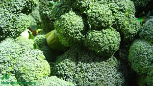 Image result for broccoli pics