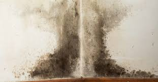 Black <b>mold</b> exposure: Symptoms, treatment, and prevention